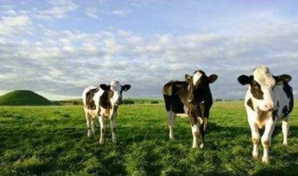 线上养牛只选内蒙古信源牧业