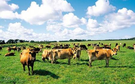 内蒙古信源牧业 一个可以手机云养牛的APP